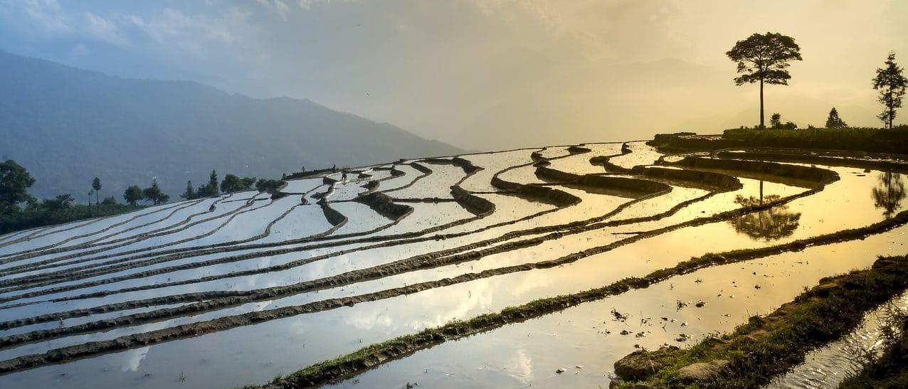 Structured Irrigation Network